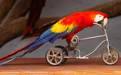 vad äter papegojor